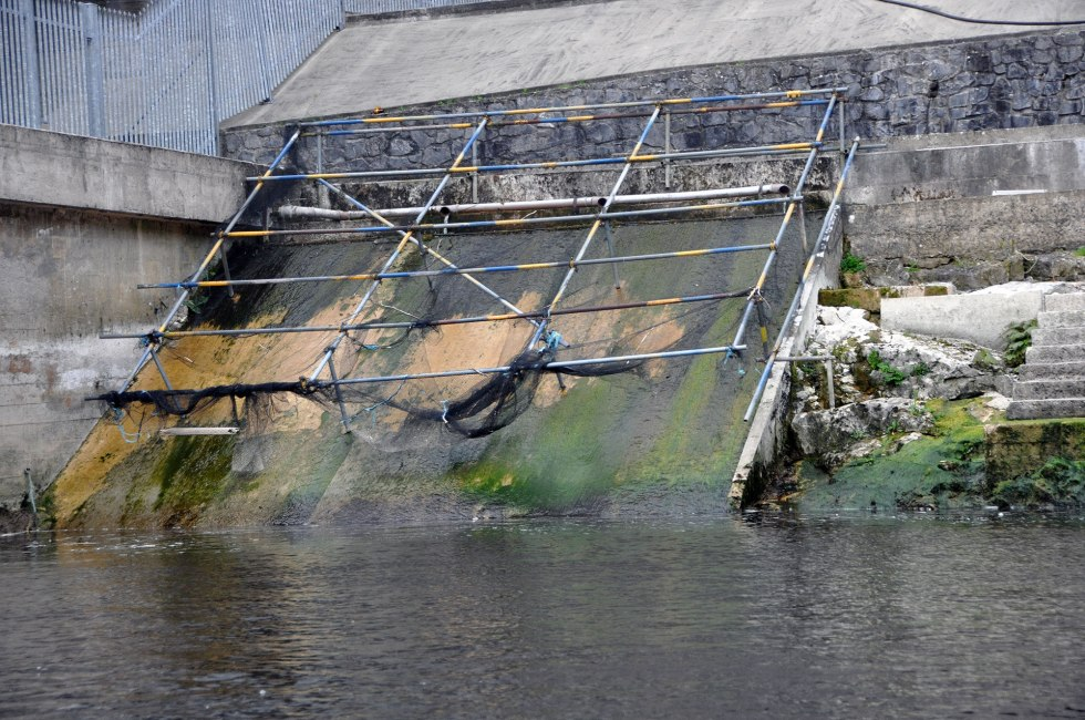 The Ardnacrusha elver trap was not operating by the first week of May 2014 therefore missing the elver run.